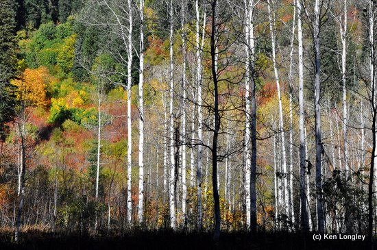 Photo by Ken Longley: trees and shrubbery along the White River in Washington.