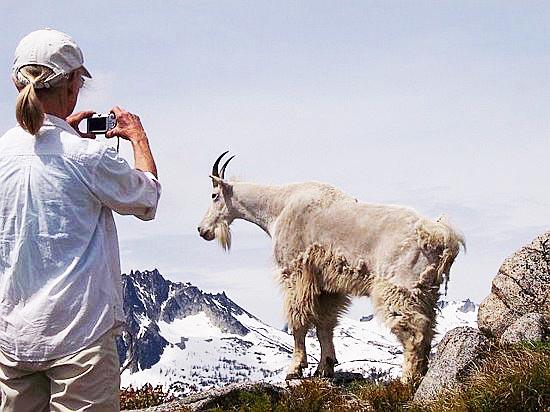 Goat-WedgeMtnEDITED