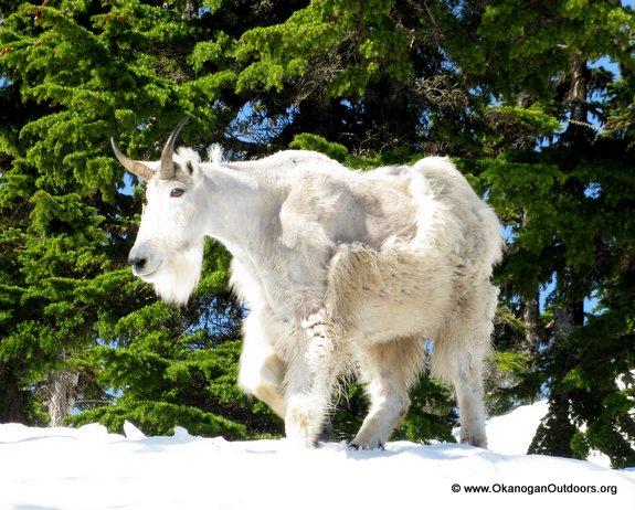 NorthCascades-Ski-614-374[1]