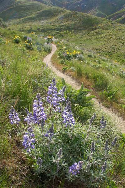sageflowers-42407-0002-lg