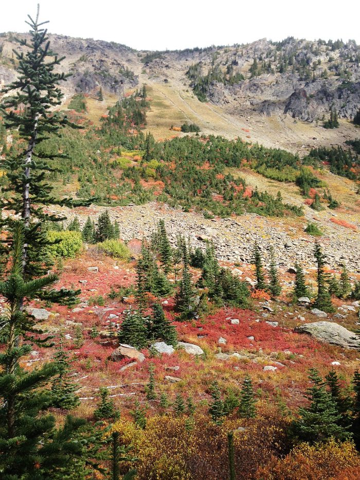 Trail to Larch Lake