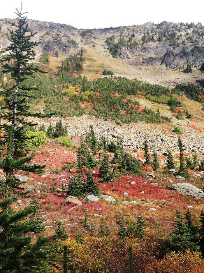 Trail to Larch Lake